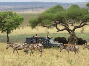 566f09bfc3c9e01555a5178e_Dorobo-Safaris-cr-courtesy