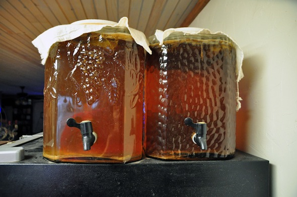 continous-brew-kombucha