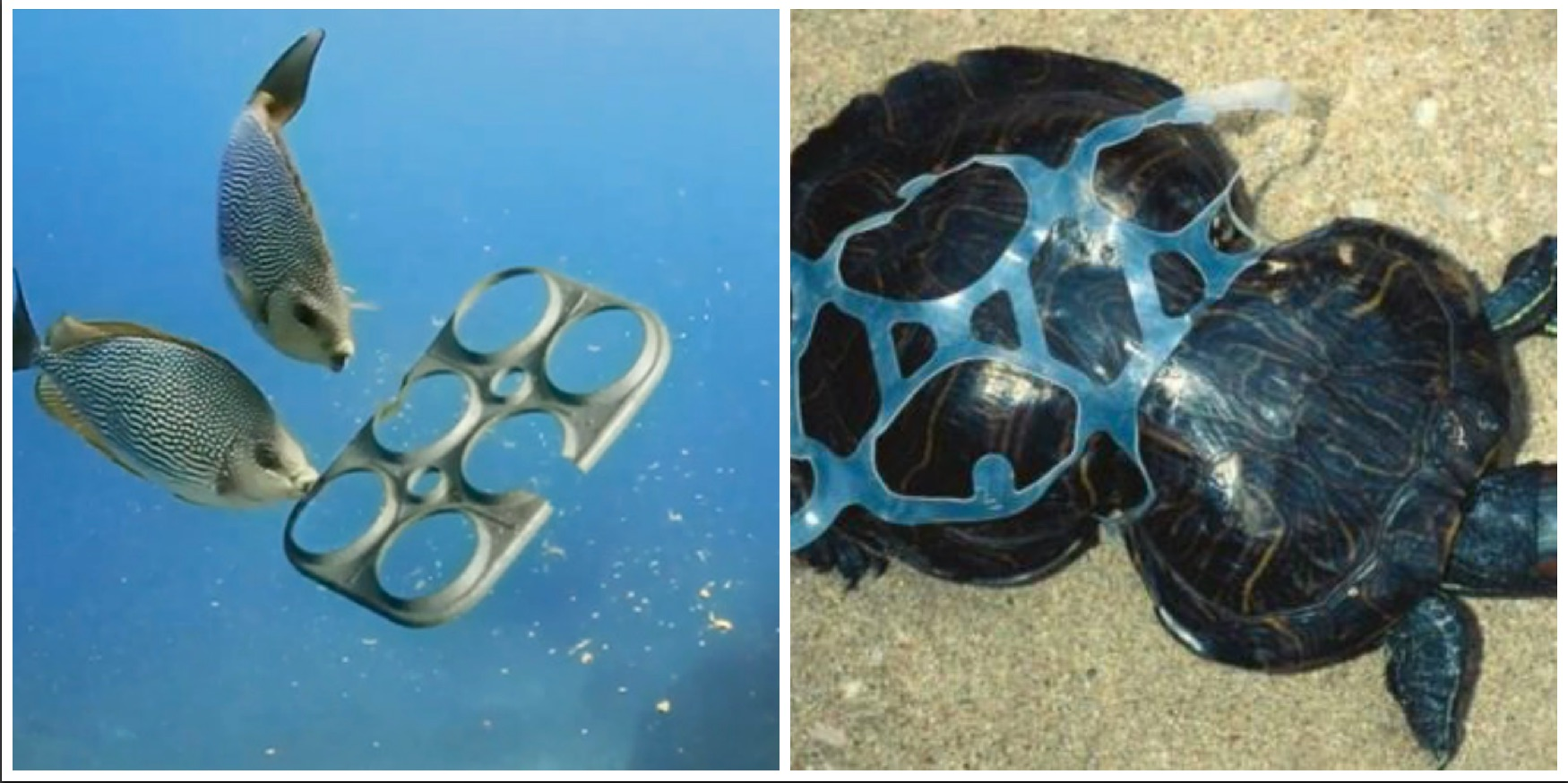 Brewery creates edible six pack rings that feed rather for Large plastic rings for crafts