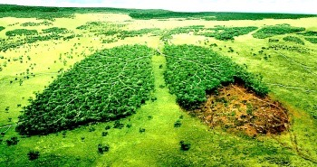 deforestation-and-lungs-1