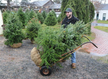 Living, Plantable Christmas Trees Reforest, Rather than Deforest