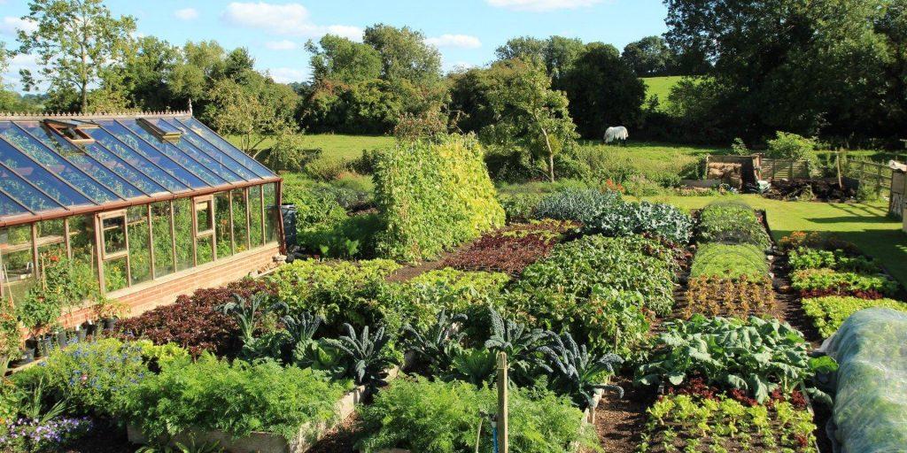 Image Result For Autumn Vegetable Garden Australia