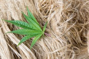 7 Reasons Hemp is the Most Powerful Plant in the World