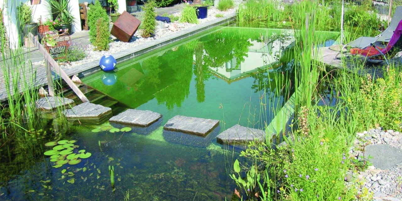 Why Europe\'s Natural Swimming Pool Trend is Coming to America