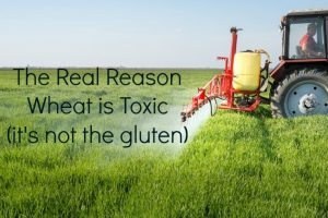 wheat-is-toxic-and-its-not-the-gluten_mi