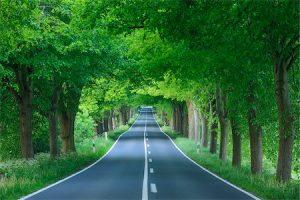 Vai trò của cây xanh ven đường đô thị và đường cao tốc