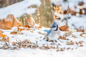 Help Birds Survive The Winter By Skipping Fall Yard Work