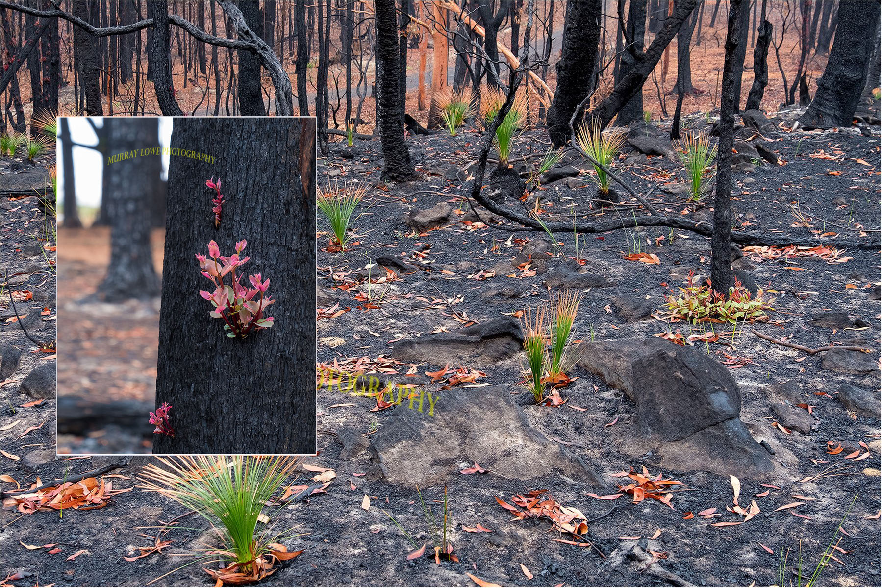 Stunning Photos Show Plants Already Regenerating in Scorched Australian Forest