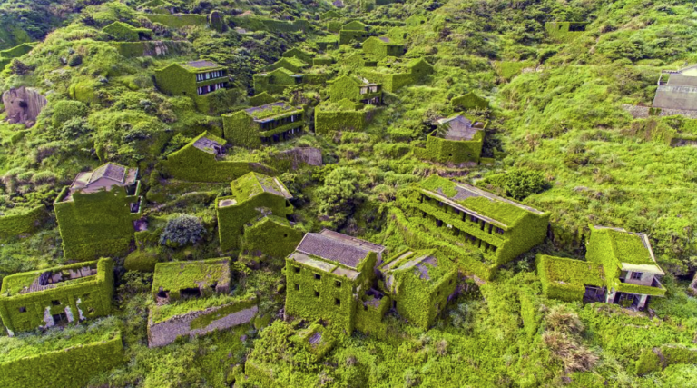 Crumbling yet still-standing houses are covered almost completely in green foliage.